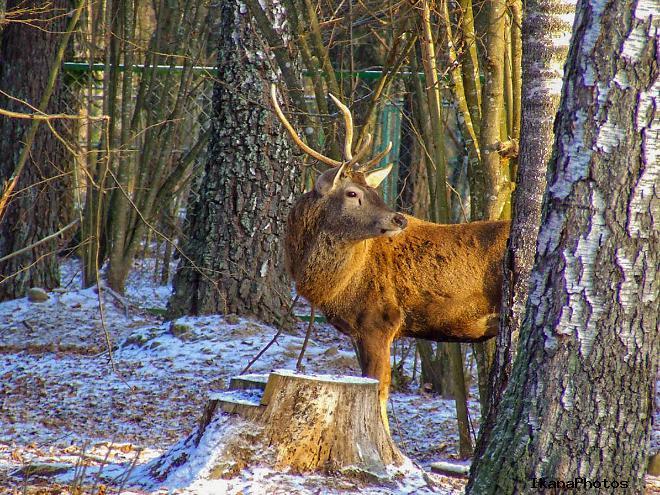 Животный мир Березинского заповедника