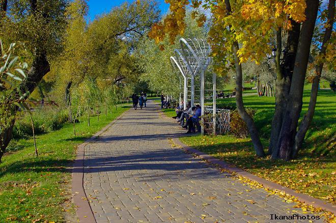 Обручальный дуб Лошицкого парка