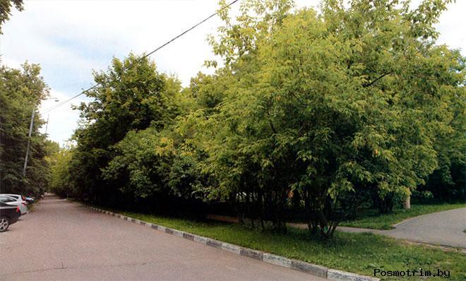 Сиреневая (она же Липовая) аллея, бывшая главная улица села Зюзино. Вид от церкви Бориса и Глеба в сторону Болотниковской улицы.