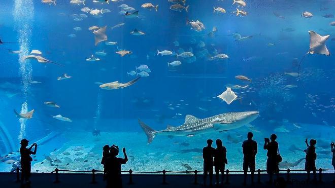 Океанариум в Анталье в Турции Самый большой в мире