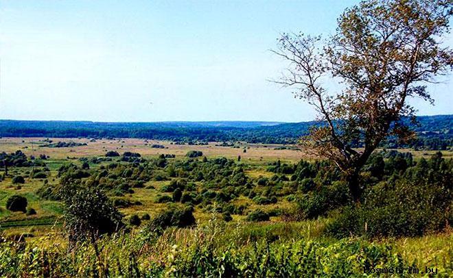 Молвитино Костромская область