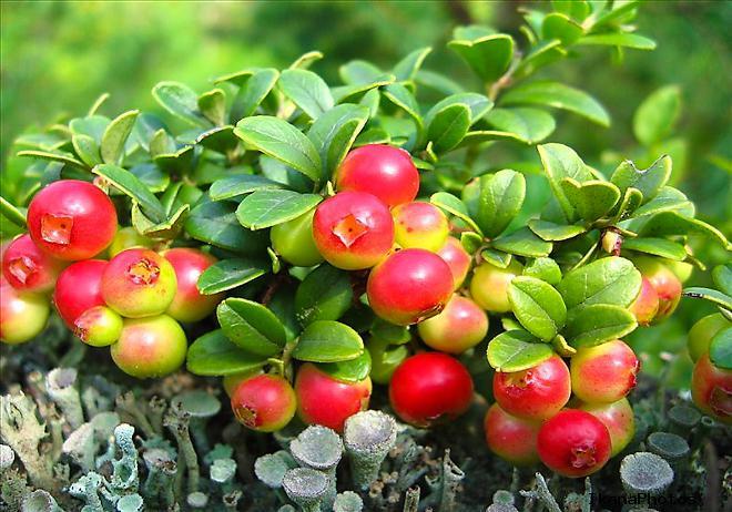 Растительный мир Березинского заповедника