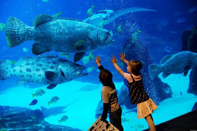 Океанариум в Анталье Турция фото цена посещение