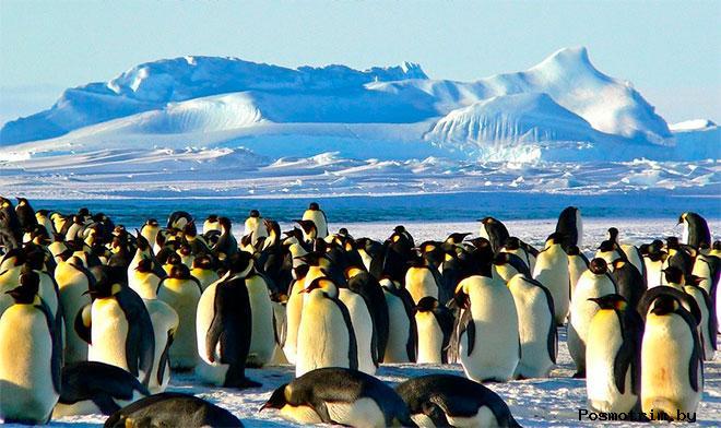 Современное открытие Антарктиды