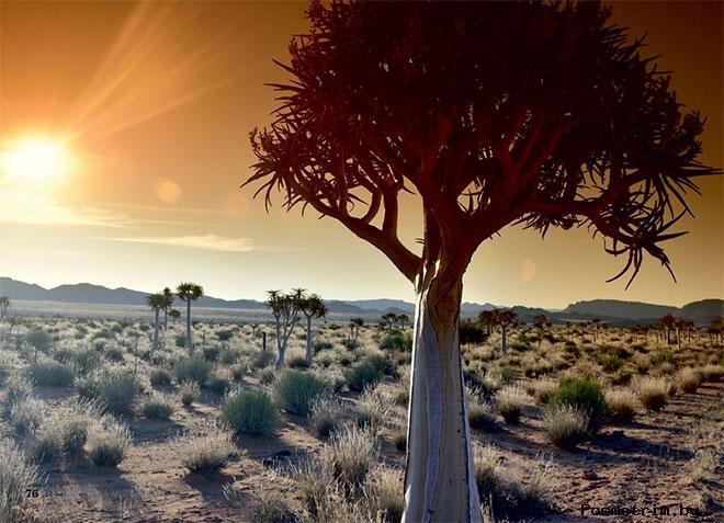 ЮАР отдых и кулинария