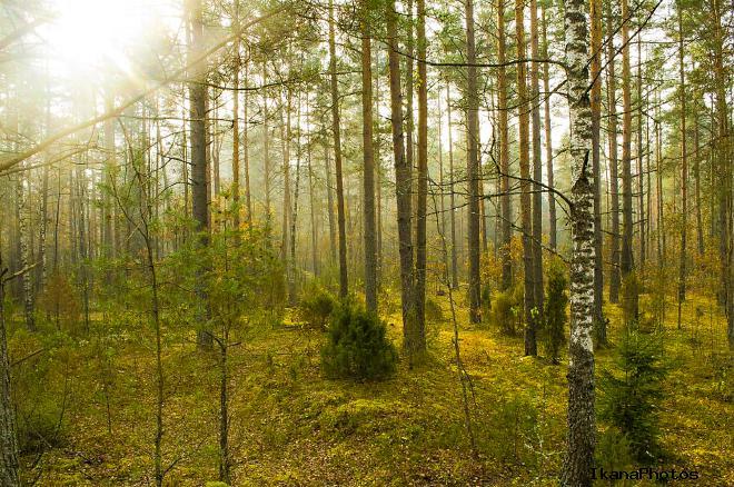 Налибокская пуща Беларусь фото история описание