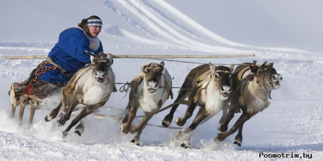 День оленевода на Ямале