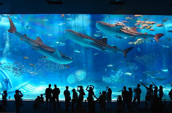 Тематические аквариумы Океанариума в Анталье