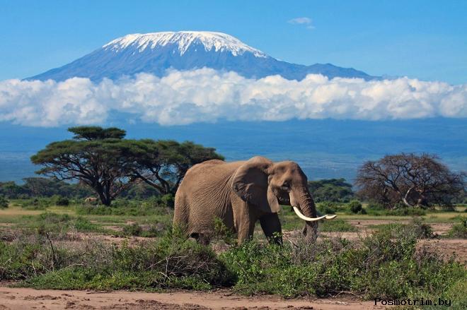 Гора Килиманджаро находится в Танзании Африка