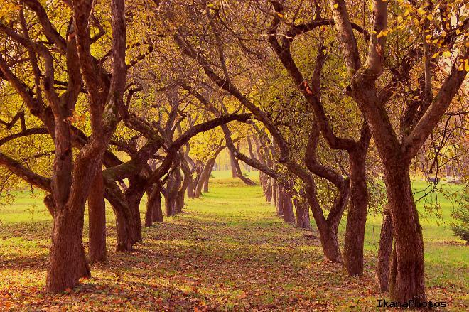 Лошицкий парк после революции