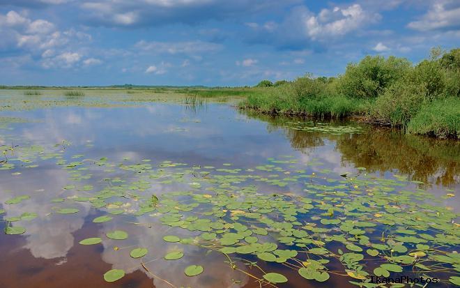 Болота Березинского биосферного заповедника