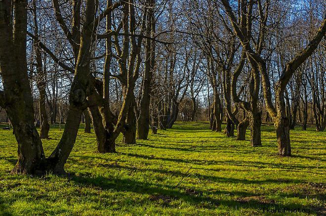 Лошицкий парк время найбольшего расцвета