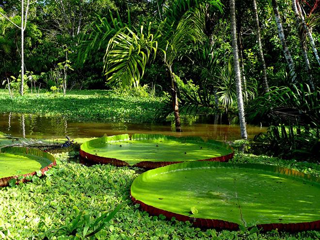 Тропические леса Амазонки Бразилия