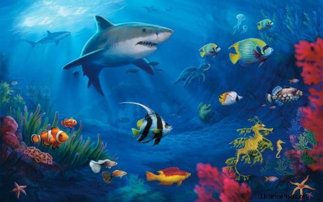 7 чудес подводного мира