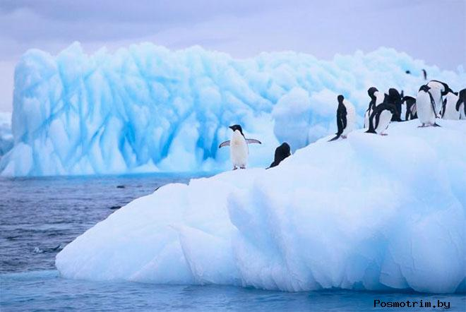 Неведомая Антарктида — «Терра Аустралис инкогнита»