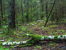 Налибокская пуща природная достопримечательность Беларуси