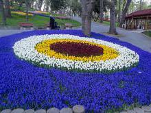 Стамбул фестиваль тюльпанов роскошные расписные скульптуры из тюльпанов