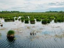 Ольманские болота Беларусь