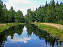 Березинский заповедник питает более 70 рек