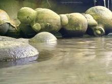 Трованты живые камни Румынии